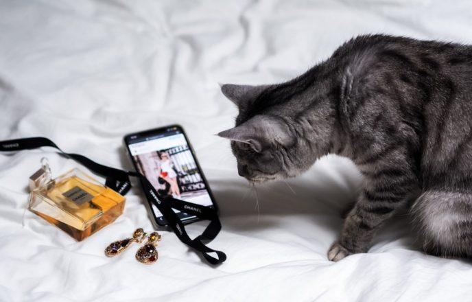 猫も気になるブログ画像の注意点
